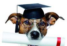 Hund mit Zeugnis akademischer Grad